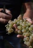Vino italiano de los campos de las uvas imagen de archivo