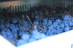 Vino italiano de los campos de las uvas imágenes de archivo libres de regalías