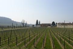 Vino italiano de los campos del viñedo imagenes de archivo