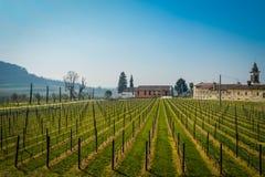 Vino italiano de los campos del viñedo fotos de archivo libres de regalías
