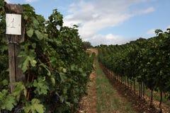 Vino italiano de los campos del viñedo fotos de archivo