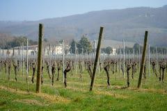 Vino italiano dei campi della vigna Immagine Stock Libera da Diritti
