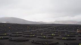 Vino nero della roccia Fotografia Stock