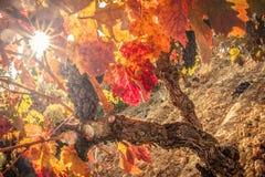 Vino rojo Foto de archivo