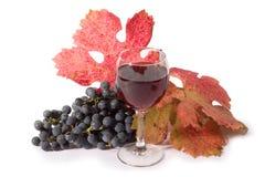 Vino rosso Immagine Stock Libera da Diritti