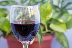 Vino rosso e foglie verdi Fotografia Stock Libera da Diritti
