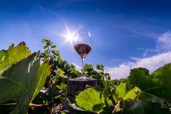 Vino rosso in vetro in mezzo ad una vigna Imag artistico di HDR Immagini Stock