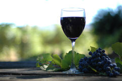 Vino In The Vineyard. Glass of red wine in the vineyard on a rustic table with whole Petite Noir grapes and leaf Stock Photography