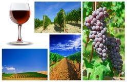 Vino y collage del viñedo Fotografía de archivo