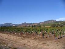 vinodling för Kalifornien sonomadal Arkivbild