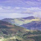 Vinodling på de portugisiska kullarna Arkivfoto