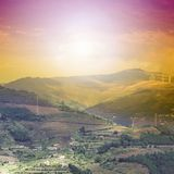Vinodling på de portugisiska kullarna Royaltyfri Foto
