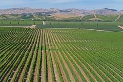 Vinos finos de un vi?edo en Nueva Zelanda imagen de archivo