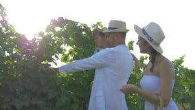 Vinproducenter under skörd, lycklig moder med sugrörkorgen och fader med den lilla sonen på händer i hattar som between går lager videofilmer