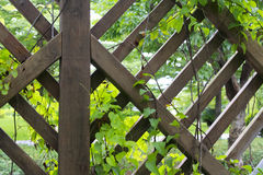 Vinranka över det wood staketet Royaltyfria Bilder