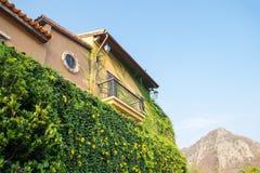 Vinranka för murgröna för byggnadstappning antik Royaltyfri Foto