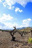 Vinranka i våren, Pyrenees orientales i Frankrike arkivbilder