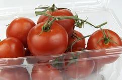 Vinranka mognade tomater i plast- behållare Royaltyfri Bild