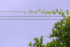 Vinranka på kabel Royaltyfri Fotografi