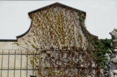 Vinranka på väggen Arkivfoton