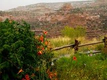 Vinranka täckt staket som förbiser kanjonen Fotografering för Bildbyråer
