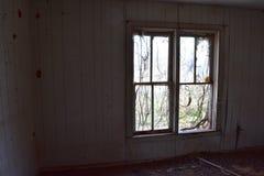 Vinranka täckte fönster i övergett hus arkivfoto