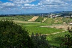 Vinrankafält i Torres Vedras Portugal Arkivbild