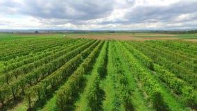 Vinrankafält Resa skottet arkivfilmer