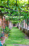 Vinrankagrändpergola i det gamla huset, Tuscany, Italien - Augusti 2016 Royaltyfria Foton