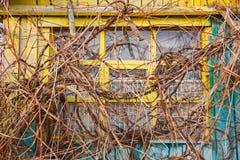 Vinrankan har stängt ett gult fönster i ett trähus royaltyfria foton