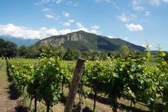 Vinrankarader - Italien, Franciacorta Arkivfoton
