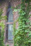 Vinrankor för klättring för tegelsten för målat glassfönster Arkivfoton