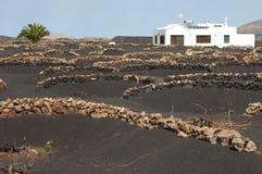 Vinrankor i skyddat landskap för La Geria royaltyfri bild