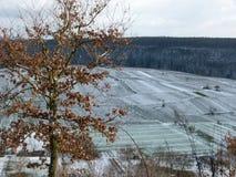 Vinrankor i snön arkivbilder