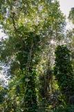 Vinrankor och träd royaltyfri foto