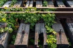 Vinrankor på övergiven järnväg Royaltyfri Bild