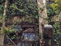 Vinrankor som växer över gammal övergiven byggande fasad Royaltyfri Foto