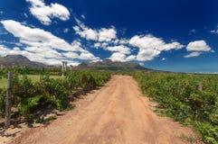 Vinrutt, stellenbosch, Sydafrika Arkivfoton