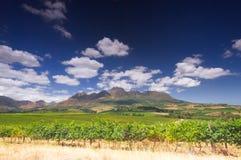 Vinrutt, stellenbosch, Sydafrika arkivbild