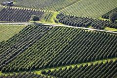 vinschgau φυτειών καρπού Στοκ Φωτογραφίες