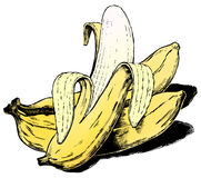 Vintage 1950s Bananas royalty free illustration