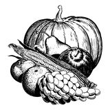 Vintage 1950s Harvest. Vintage 1950s etched-style harvest of fruit and vegetables; detailed black and white from authentic hand-drawn scratchboard stock illustration