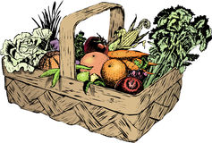 Vintage 1950s Harvest Basket. Vintage 1950s etched-style harvest of fruit and vegetables in a basket; detailed black and white from authentic hand-drawn vector illustration