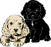 Vintage 1950s Puppies. Vintage 1950s etched-style cute puppies. Detailed black and white from authentic hand-drawn scratchboard includes full colorization vector illustration