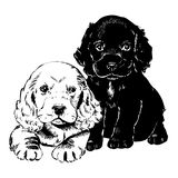 Vintage 1950s Puppies. Vintage 1950s etched-style cute puppies. Detailed black and white from authentic hand-drawn scratchboard stock illustration