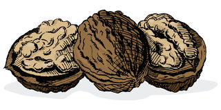 Vintage 1950s Walnuts Stock Images