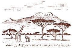 Vintage African landscape. Safaris and wild giraffes. Kilimanjaro mountain in Savannah. Animals engraved hand drawn old. Monochrome sketch for label royalty free illustration