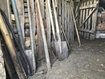 Vintage agricultural tools stand in a row in a wooden barn: rakes, hoes, pitchfork, shovels and more.  royalty free stock image