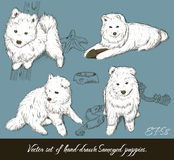Vintage ajustado com filhotes de cachorro do samoyed. Ilustração Stock