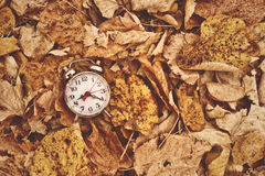 Vintage alarm clock in dry autumn leaves Stock Photo